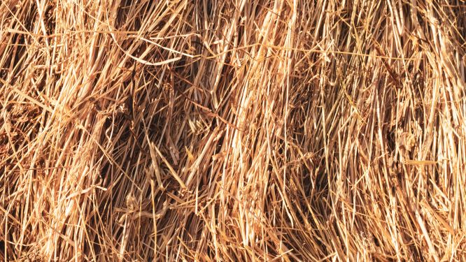 pile of gold straw mulch