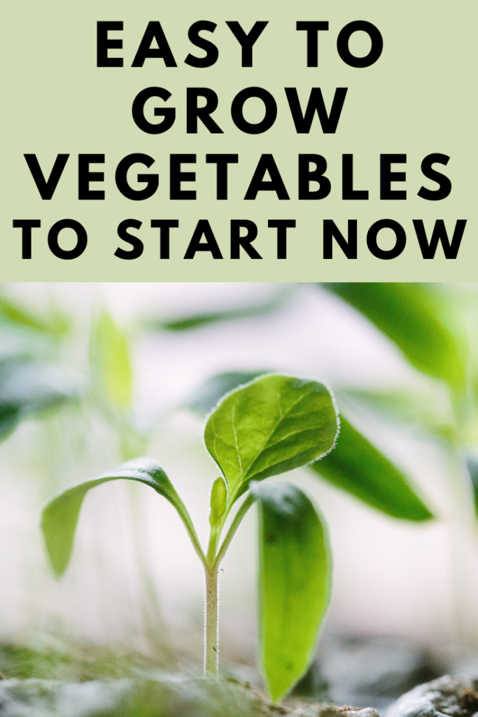 "https://itsgardenthyme.com/wp-content/uploads/2020/01/Easy-to-Grow-Vegetables-to-start-now-683x1024.png"" alt=""Dont buy your vegetables at the nursery this year! The winter is a great time to start planning for this year's vegetable garden. Now is the perfect time to think ahead by mapping out what easy to grow vegetables you want in your vegetable and herb garden this year. Here is an amazing list of easy to grow vegetables for your garden!"