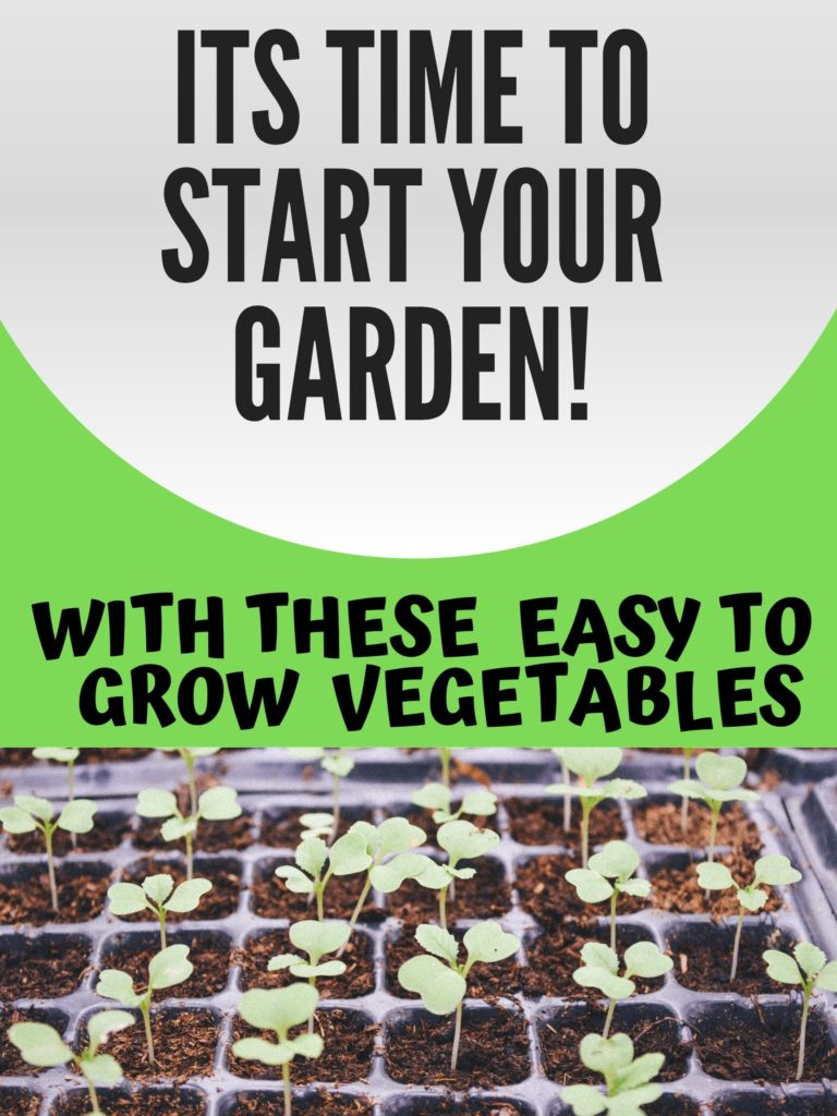 Dont buy your vegetables at the nursery this year! The winter is a great time to start planning for this year's vegetable garden. Now is the perfect time to think ahead by mapping out what easy to grow vegetables you want in your vegetable and herb garden this year. Here is an amazing list of easy to grow vegetables for your garden!
