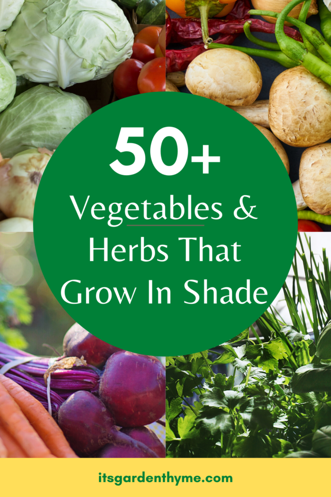 vegetables and herbs that grow in shade
