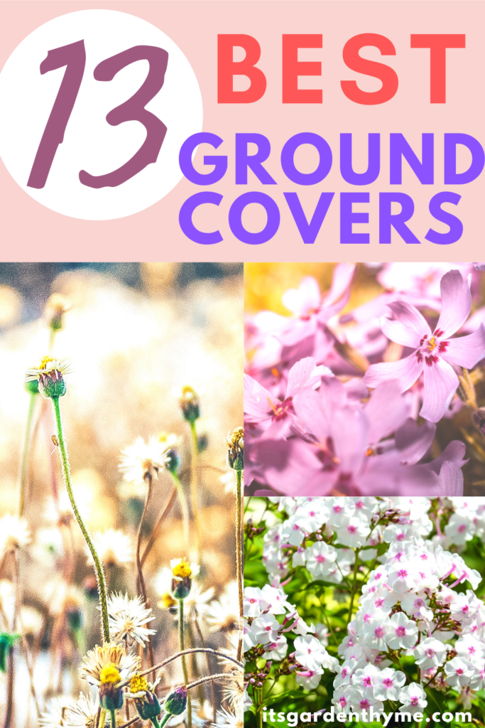 13 Best Flowering Ground Covers