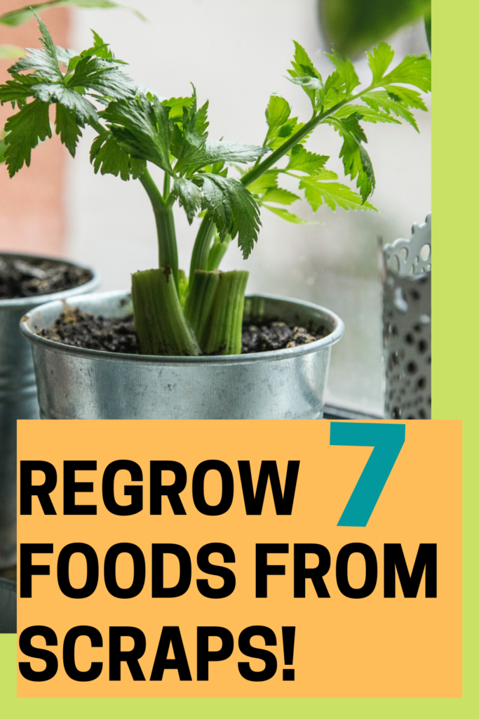 Food you can grow from scraps