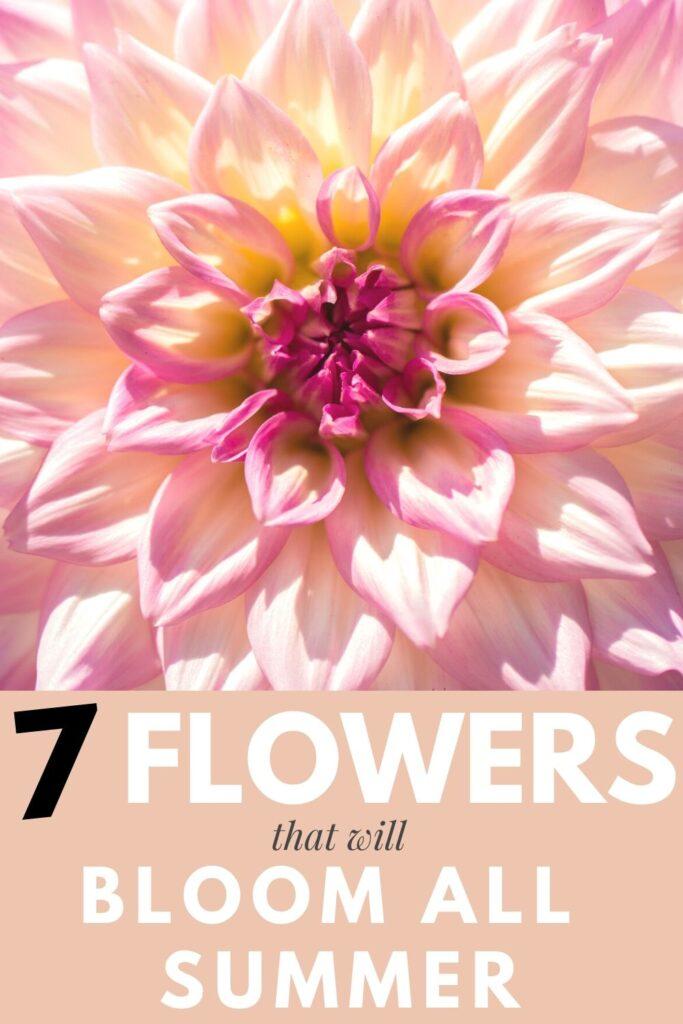 sun loving flowers poster for your flower garden