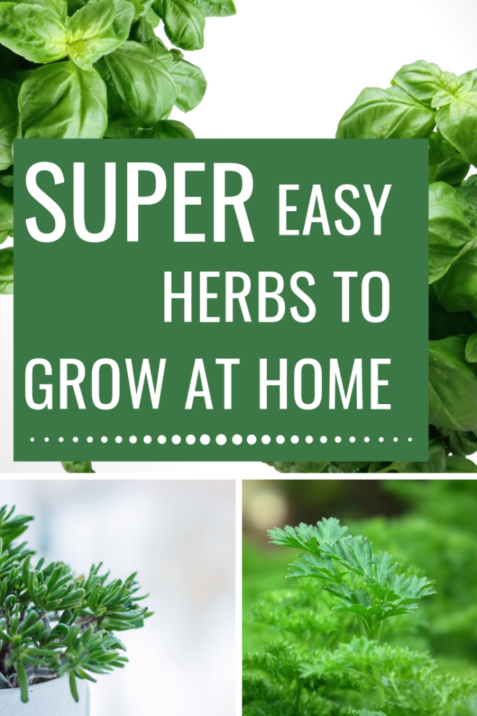 super easy herbs to grow at home